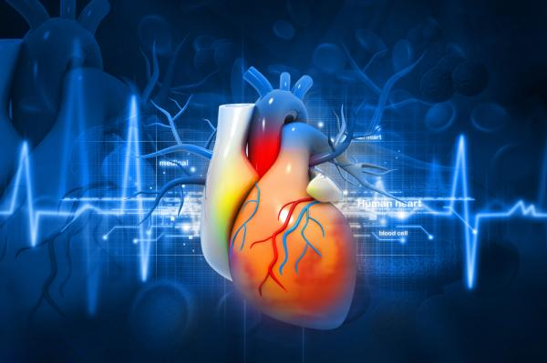 best cardiology hospital in bangalore9